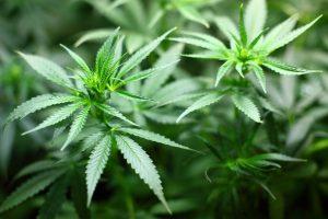 Alaska marijuana surety bond