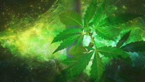 Nevada Marijuana Surety Bond