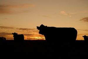 Wisconsin Livestock Packers and Stockyards Bond
